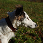 wagging tails - Image 104